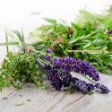Zioła, mieszanki ziołowe